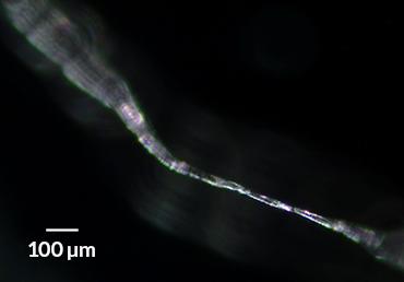 a microplastic fiber