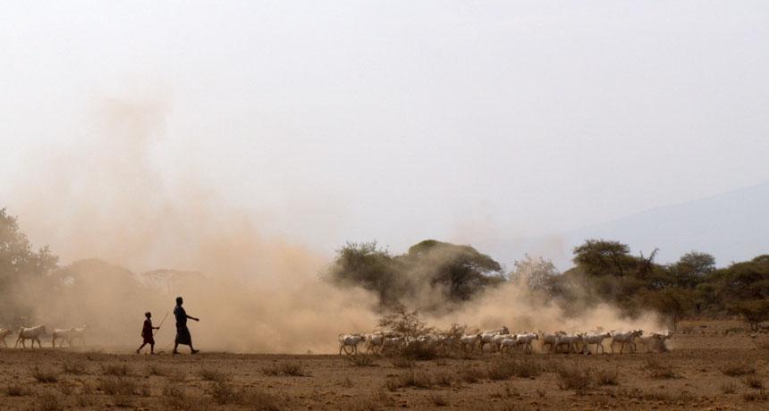 modern African herders in Tanzania