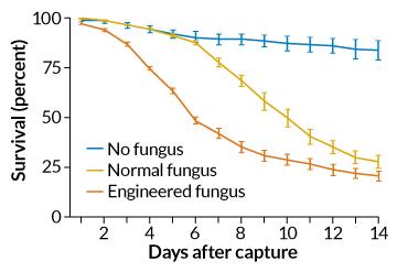 mosquito graph