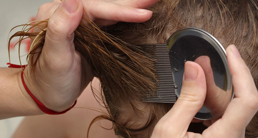 parent combing child's wet hair looking for lice and nits