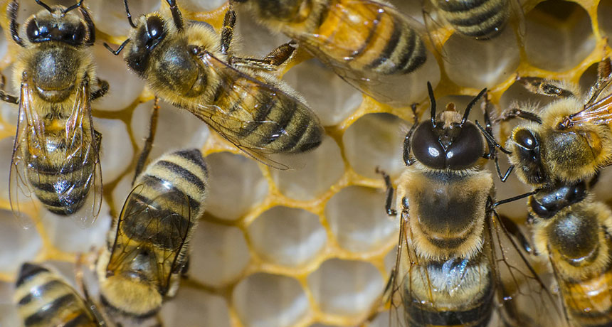U S  honeybees had the worst winter die-off in more than a