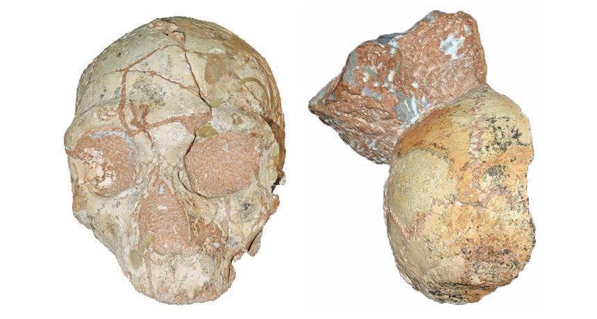 Greek skull fragments