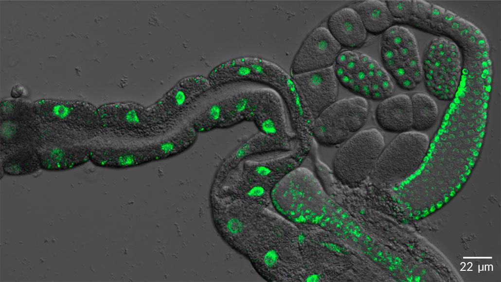protein microscopy