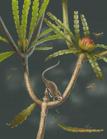 Microdocodon gracilis