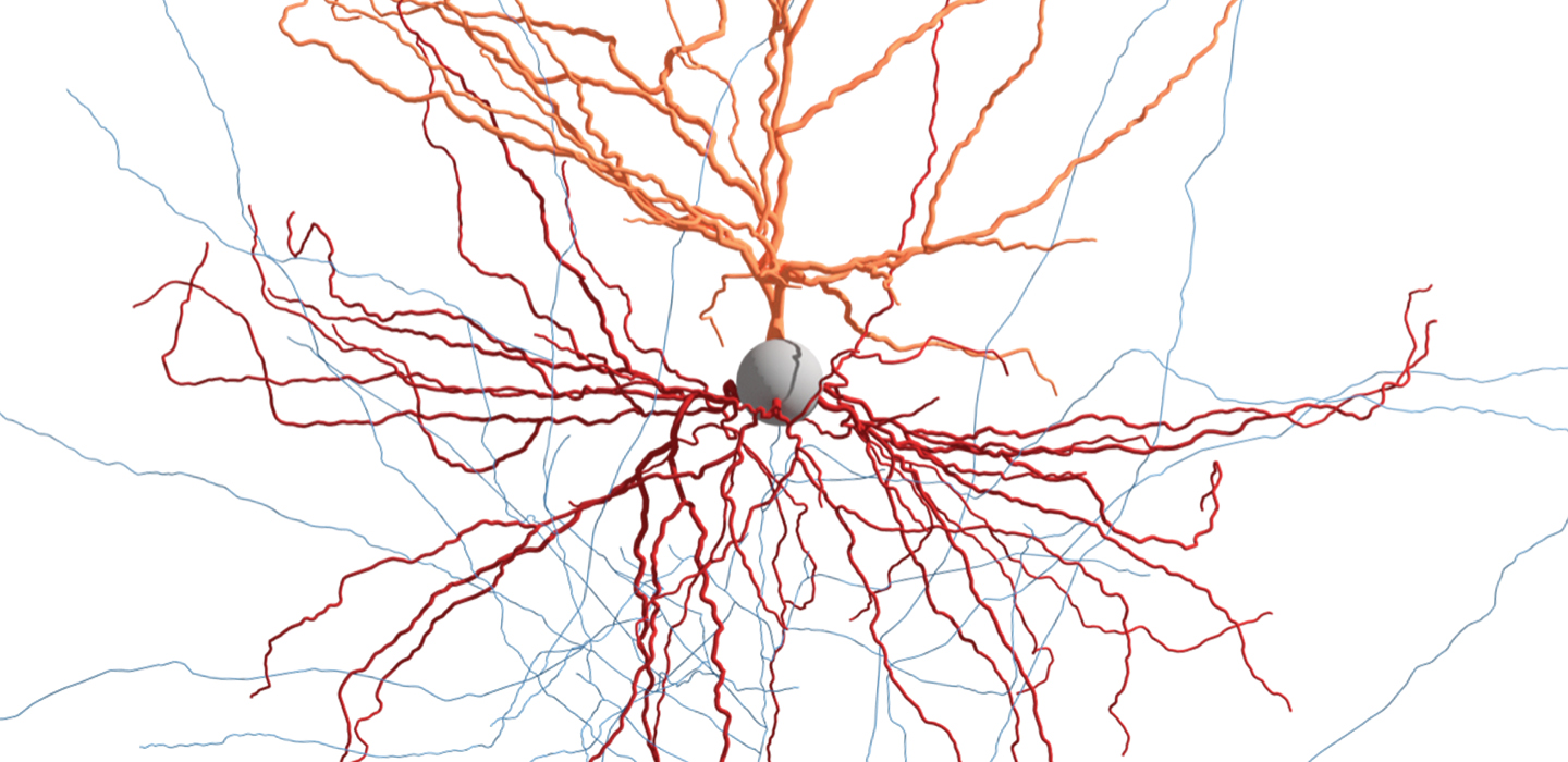 If Genes Dont Turn Off Brains Wiring >> How Pieces Of Live Human Brain Are Helping Scientists Map