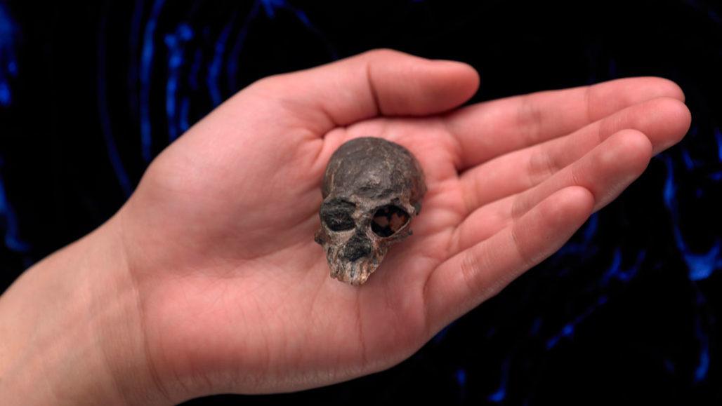 Primate skull in hand