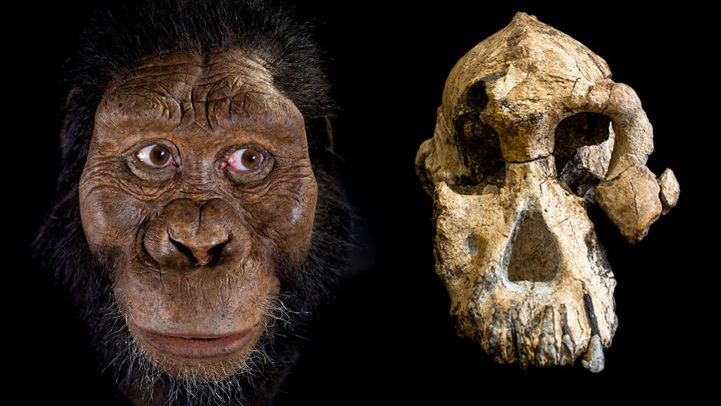 hominid skull reconstruction