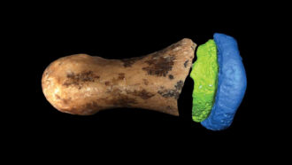 Denisovan finger bone