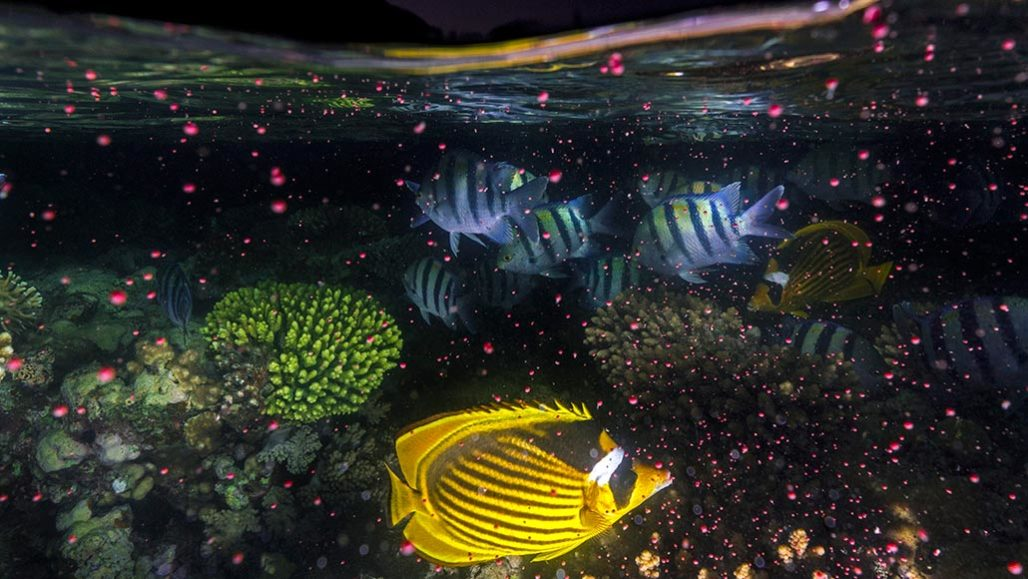 coral reef environment