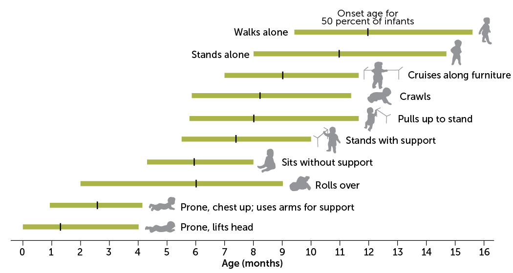 motor development chart