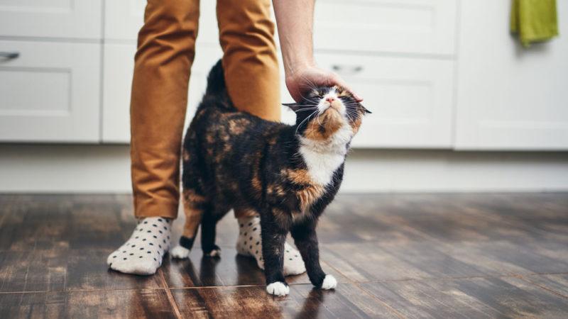 cat rubbing up against owner's legs