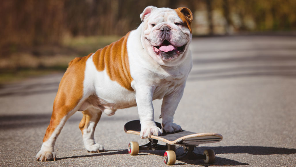Image result for dogs breed