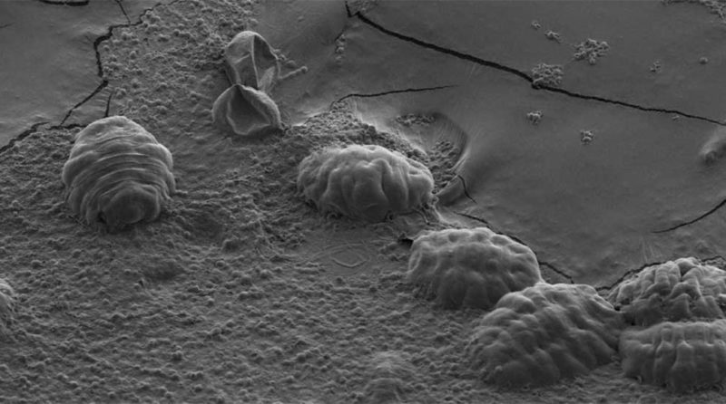 How tardigrades protect their DNA to defy death