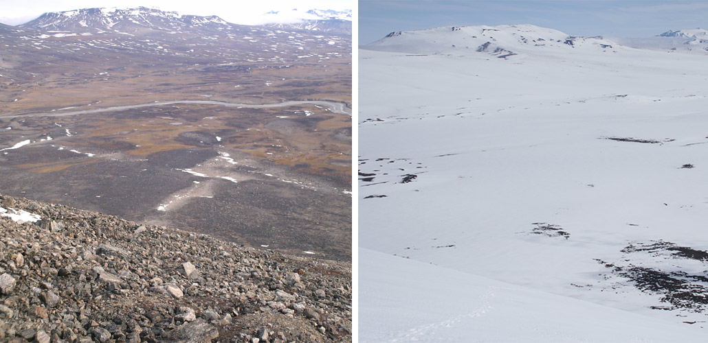 Heavy snow in part of Greenland stunted plant and animal reproduction
