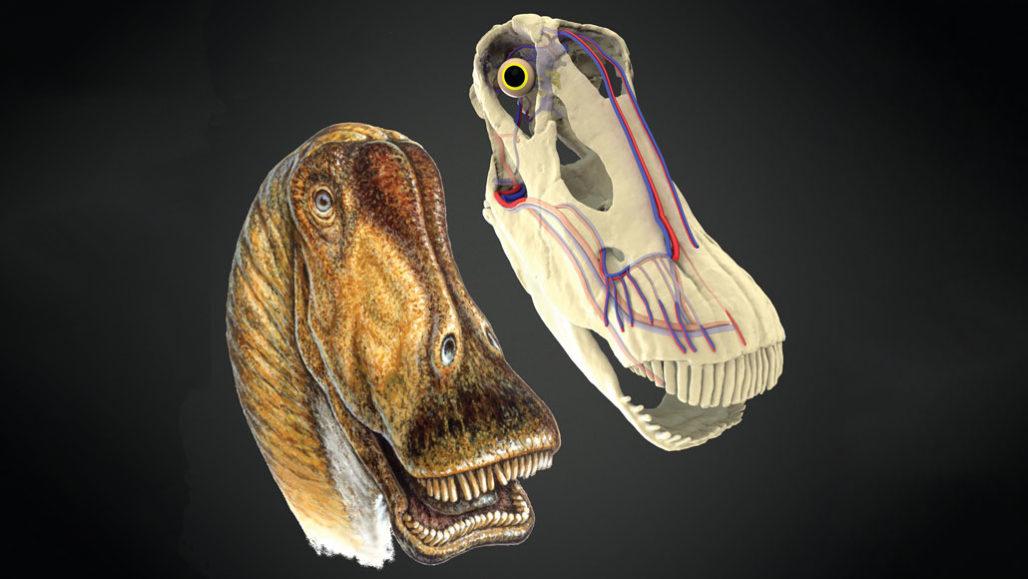 Diplodocus dino head