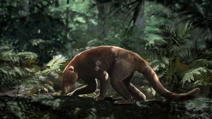Loxolophus mammal