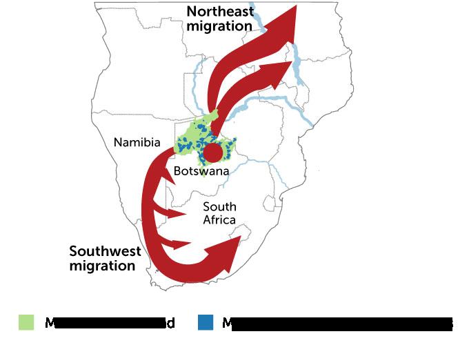 Homo sapiens migration map