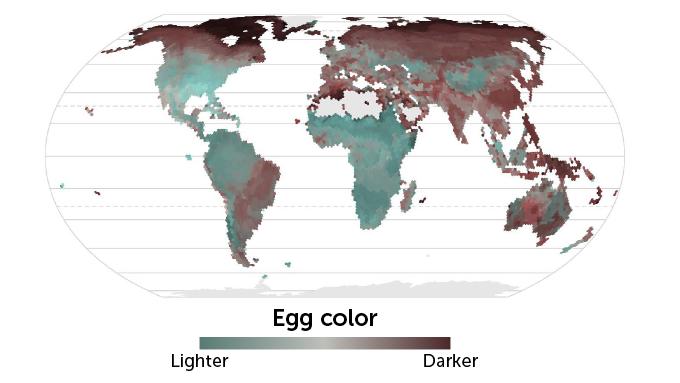 egg color map desktop