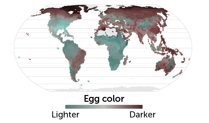 egg color map mobile