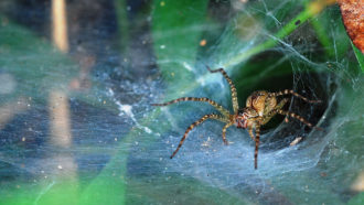 Spider webs don't rot easily and scientists may have figured out why