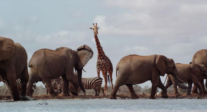 Kenya savanna watering hole