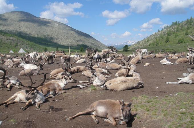 Tsaatan herder summer camp in 2017