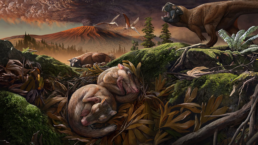 Origolestes lii, shown in the foreground in this artist's rendition, was a shrew-sized mammal that lived about 123 million years ago in an ecosystem known as the Jehol Biota in what's now China. By Chuang Zhao