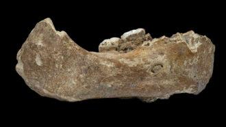 partial Denisovan jaw