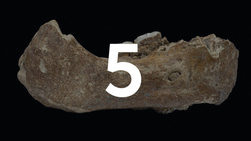 partial jaw of a Denisovan