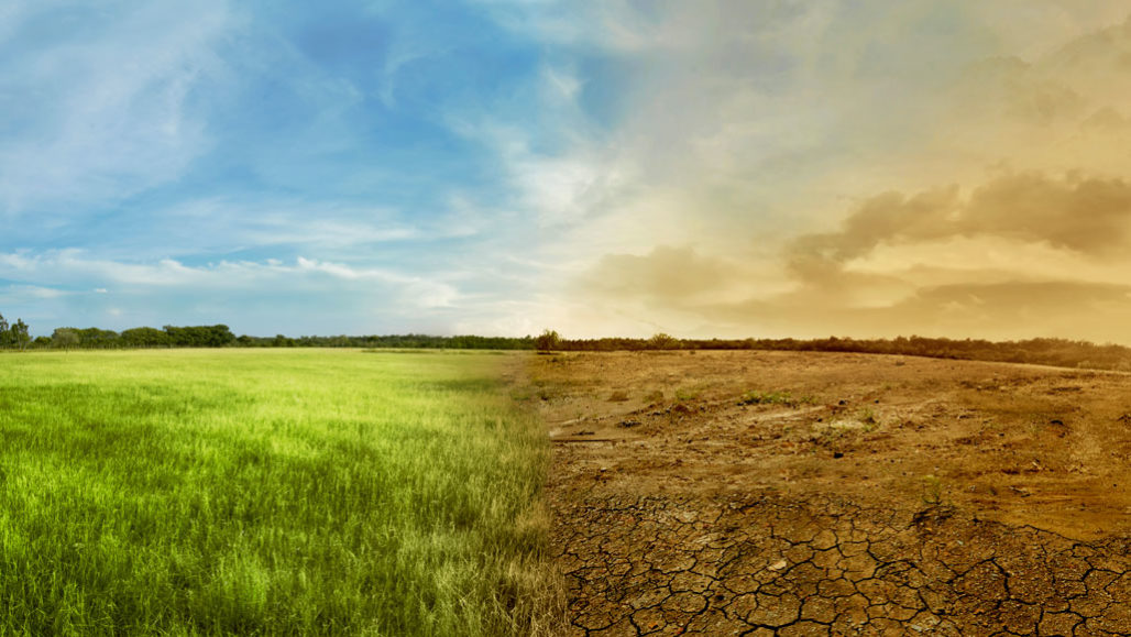 stock image of dry vs. healthy environment