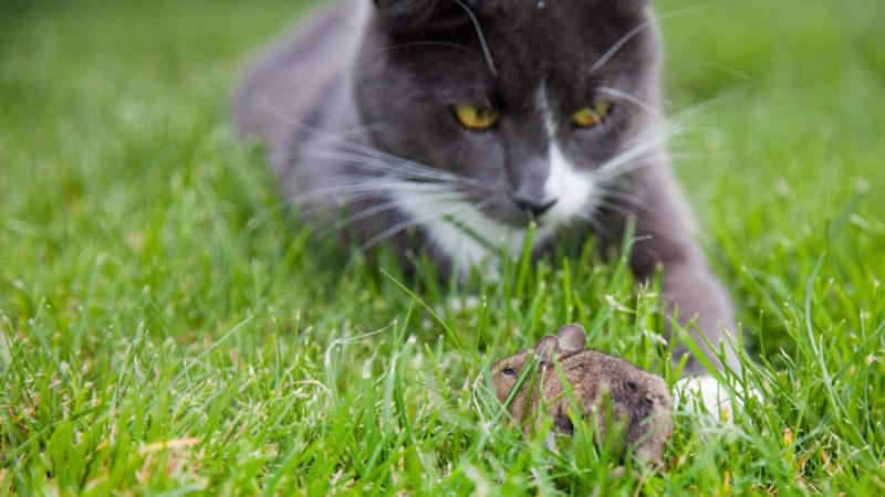 Cat on grass