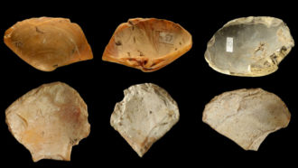 Neandertals dove and harvested clamshells for tools near Italy's shores