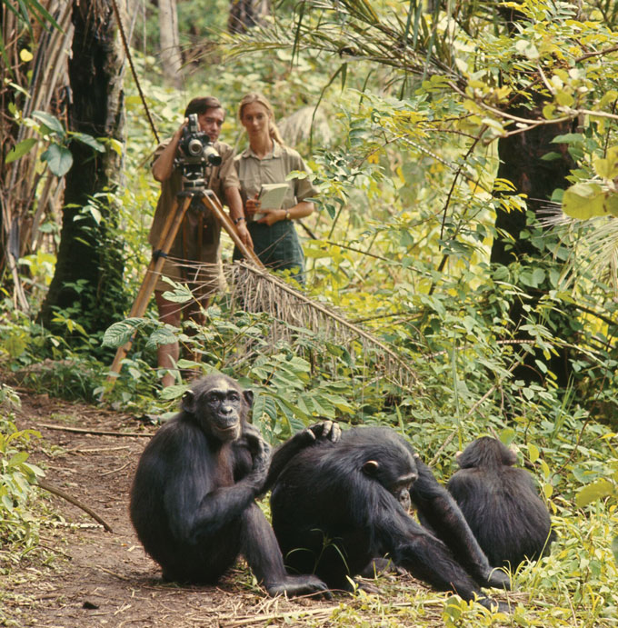 Jane Goodall studying chimps