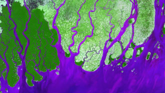 Fed by human-caused erosion, many river deltas are growing