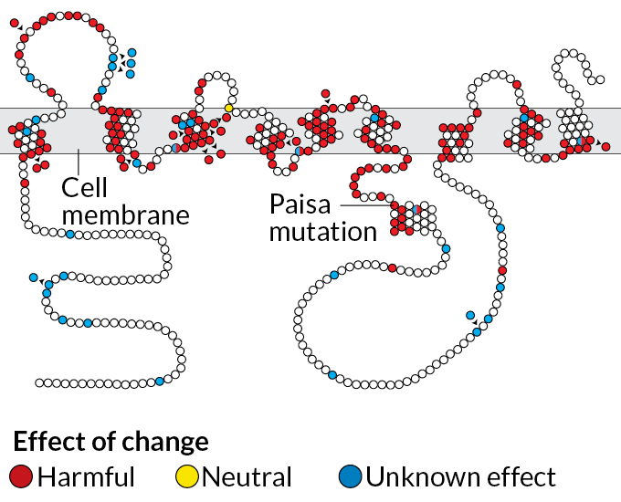 presenilin mutation diagram