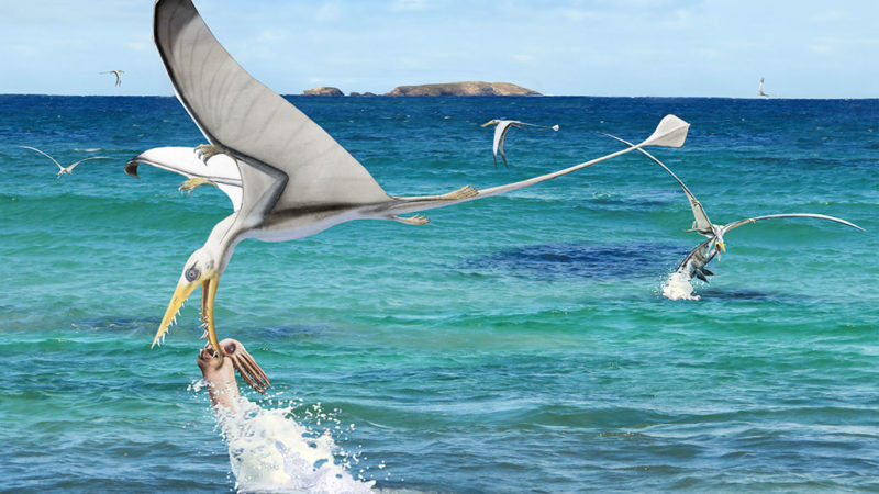 pterosaur trying to eat squid illustration