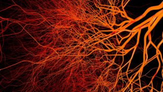 illustration of blood vessels