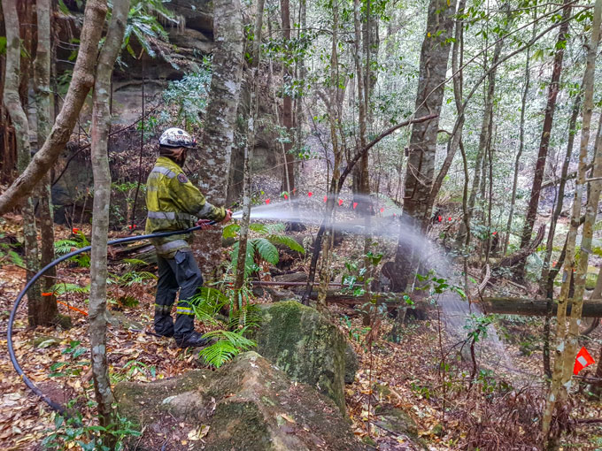 firefighter in Wollemi pine forest