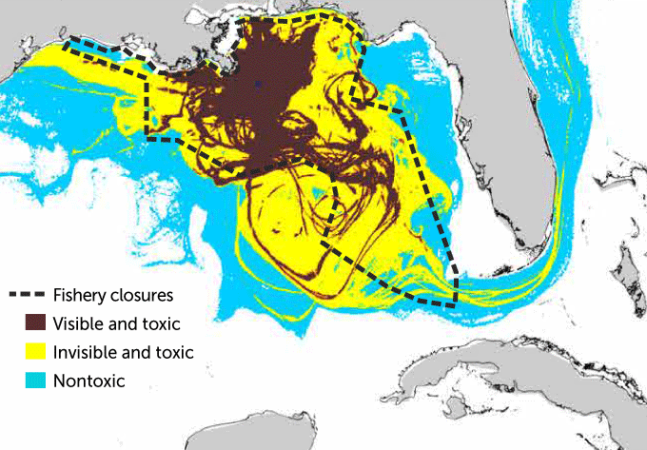In the immediate aftermath of the Deepwater Horizon spill, satellite observations that could detect high oil concentrations (brown) helped determine where to close fisheries in the Gulf of Mexico (black dashed line). But computer simulations of the spill indicate that lower oil concentrations invisible to satellites but still toxic to marine creatures (yellow) crept outside the boundaries of the fishery closures. Meanwhile, even lower, nontoxic levels of oil pollution (blue) spread even more widely