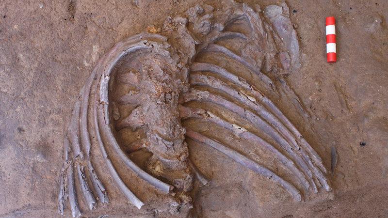 Neandertal fossils in Shanidar Cave