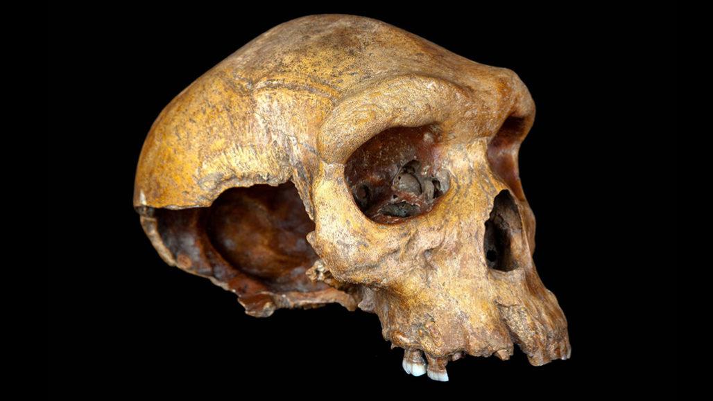 Broken Hill skull