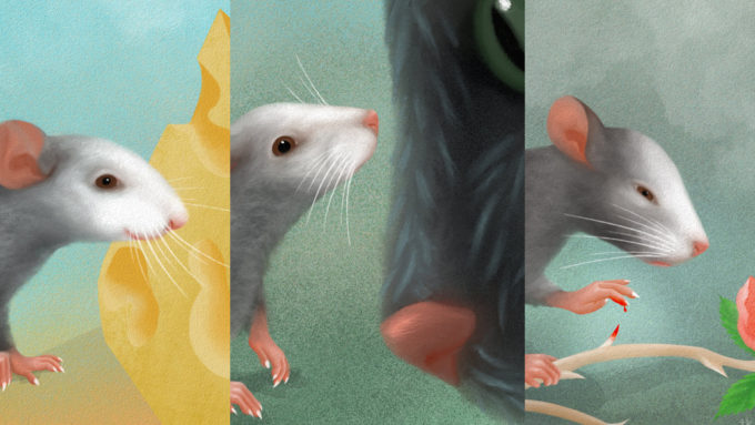 Mouse expression illustration