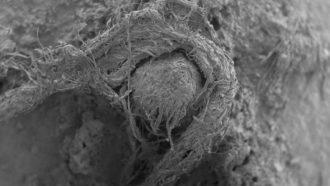 SEM image of Neandetal string