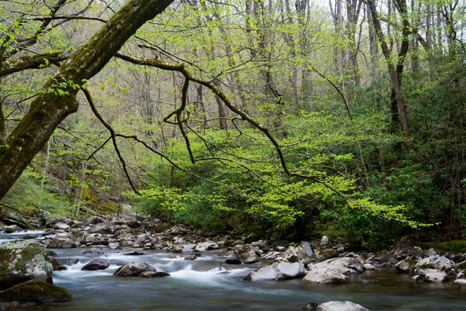 Appalachia stream