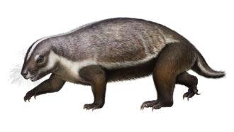 gondwanatherian