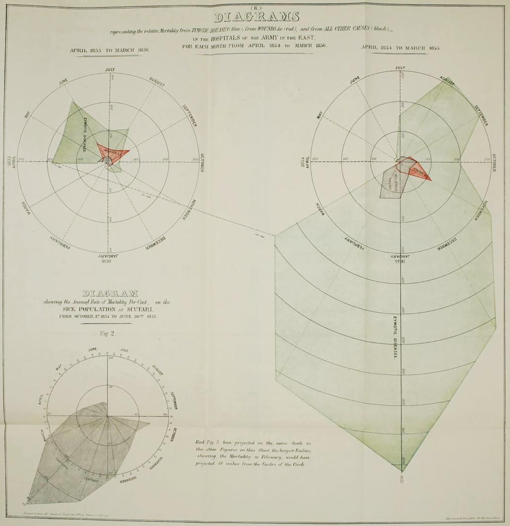 Bat's wing diagram