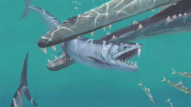 anchovy ancestor