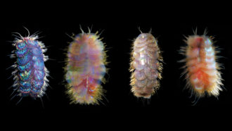 four brightly colored, fuzzy-looking critters