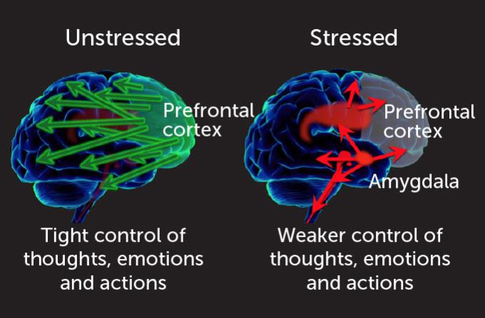 experiment diagram of brains
