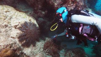 Frederieke Kroon diving